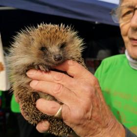 Hedgehog Half Marathon