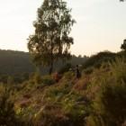 Devil's Punchbowl Sunset 10k