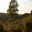 Leith Hill Sunset 10km